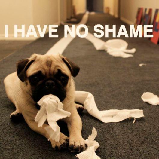 shameless-pug